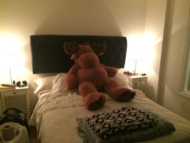 Logan's bedroom ft. Moose.